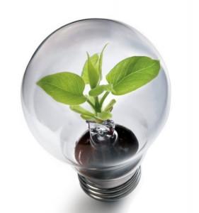 We'll Help Your Ideas Grow